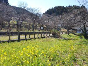 小湊鉄道月崎駅の菜の花