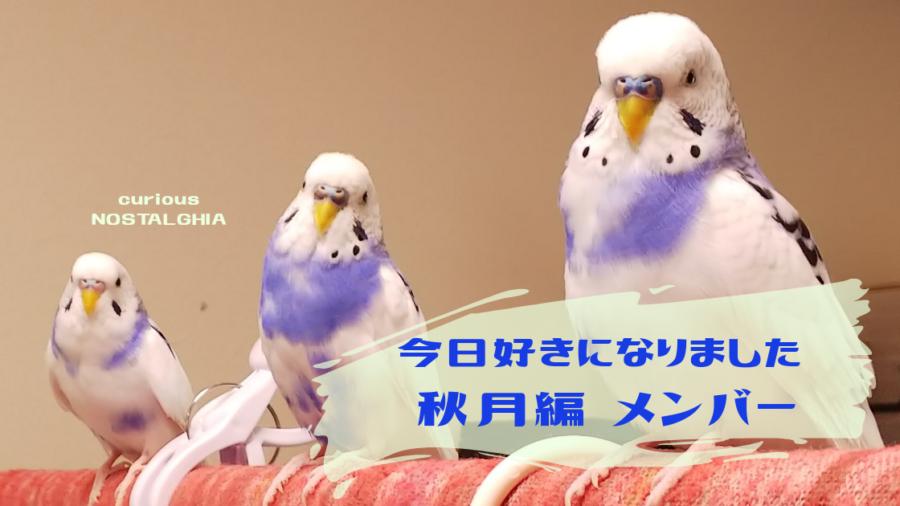 秋月 メンバー 好き 今日 編